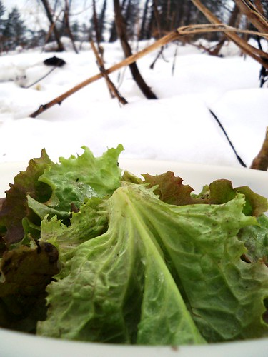 january salad