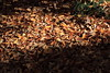 Photo:Fallen Leaves / 落ち葉(おちば) By