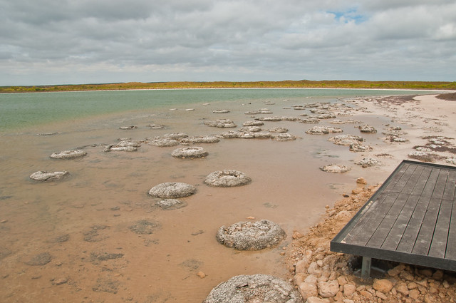 Stromatolites (or thrombolites) at Lake Thetis, Cervantes, Western Australia