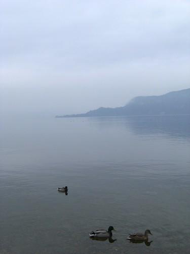 san vigilio and ducks in cristal clear water