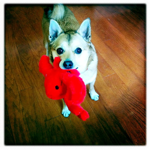 Simon loves his lobster!