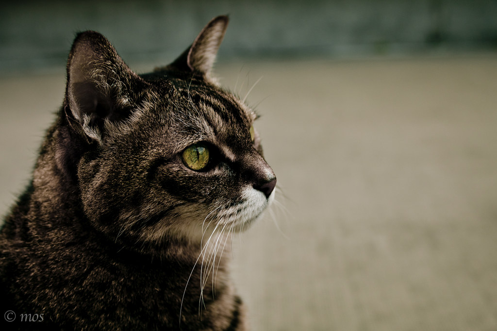 another aspect of the old cat