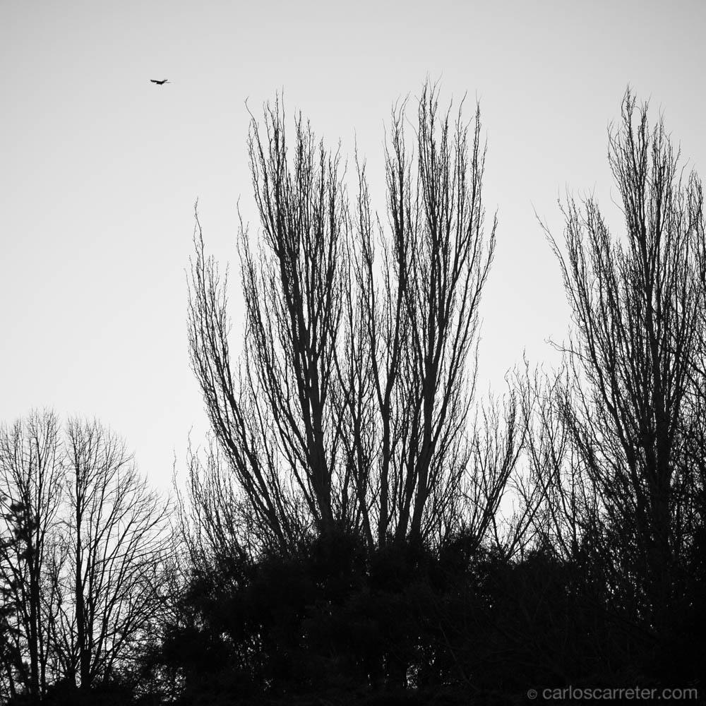 Árboles y ave