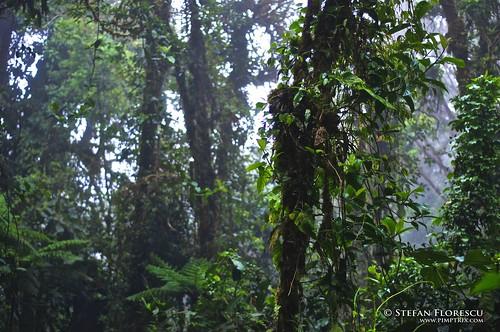 KLR 650 Trip Costa Rica 13