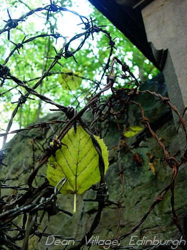 green-leaf-barbed-wire