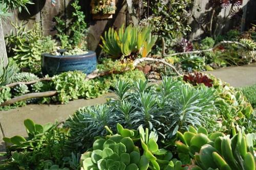 Succulent Corner Experiment