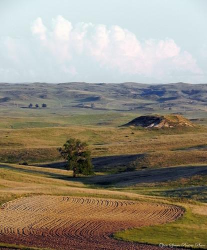Freshly Plowed Field, Eastern MT