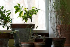 Houseplants and Clean Air