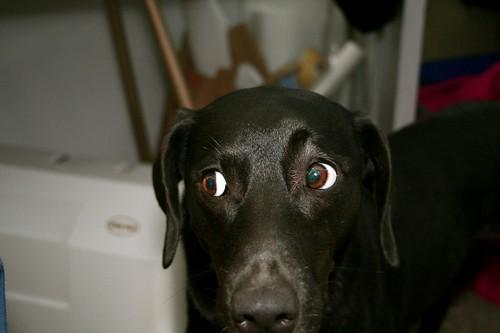 signe's amazing eyes