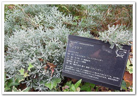 神戶布引_香草