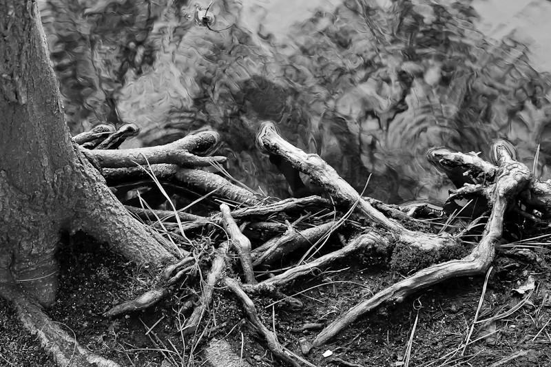 roots and water 2