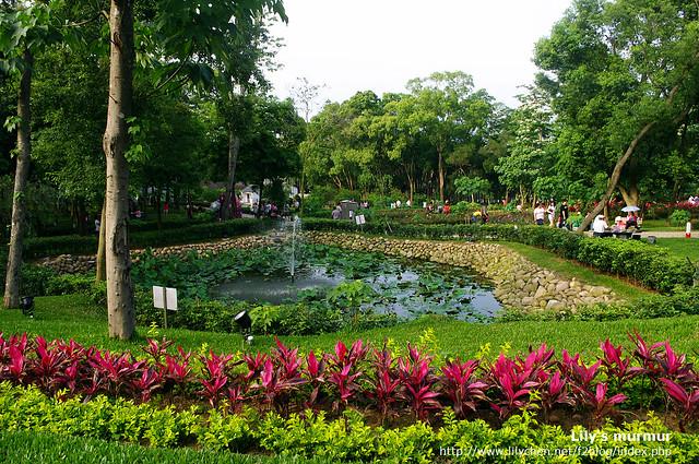 苗栗縣銅鑼鄉桐花公園園內一景,據說那個造成生態浩劫的牛蛙放養活動就在這裡...