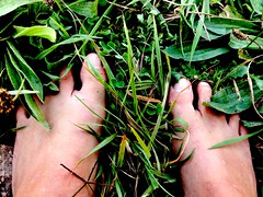 Freedom in the grass