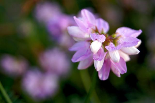 Meadow Flower 1