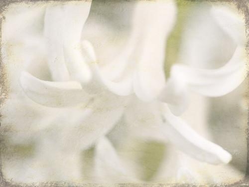 04-20-11 garden 3