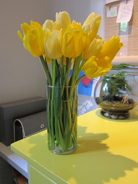 Daffodil Coloured Tulips