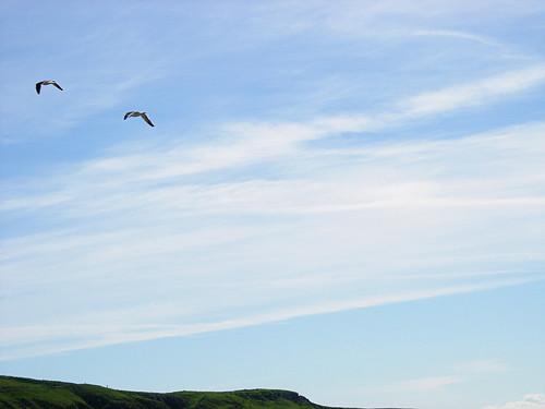 Birds-over-Skye
