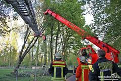 Umgestürzter Baum Maaraue 12.04.11