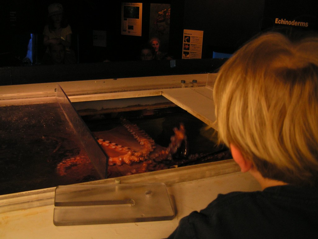 Behind the scenes at the National Zoo, feeding Octavius the octopus