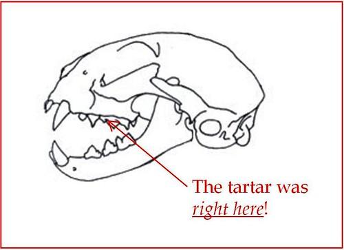 tartar
