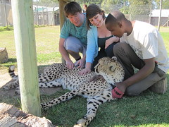 Patting the Cheetah