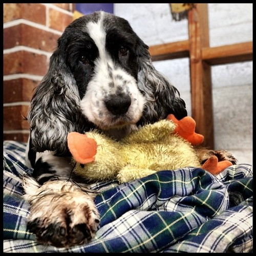 The lovely Clover and her Ducky.