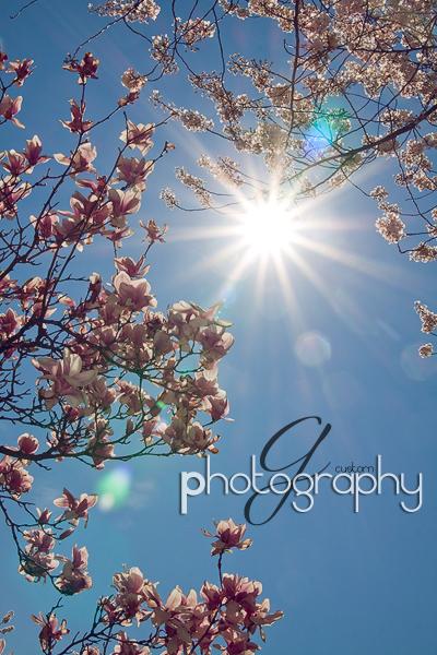 Spring Sunburst