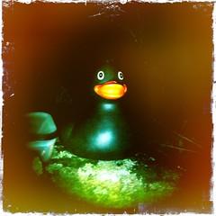 Duck Geocache