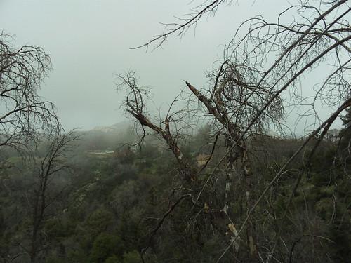 Fog In The San Bernardino Mountains