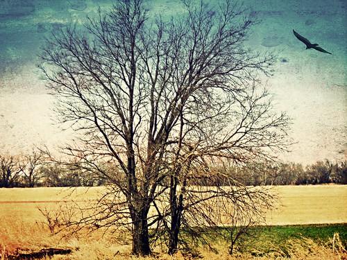 Oklahoma Desert Composite - foto: Victoria Anglin, flickr
