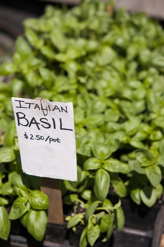 How much do I love basil?