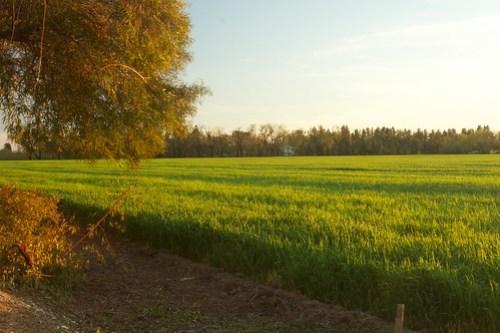 Winter Wheat south