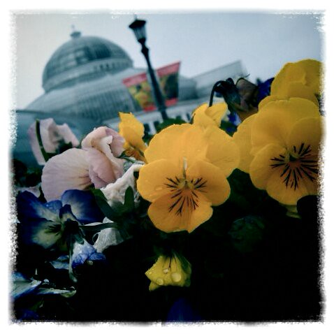 Pansies and the Conservatory