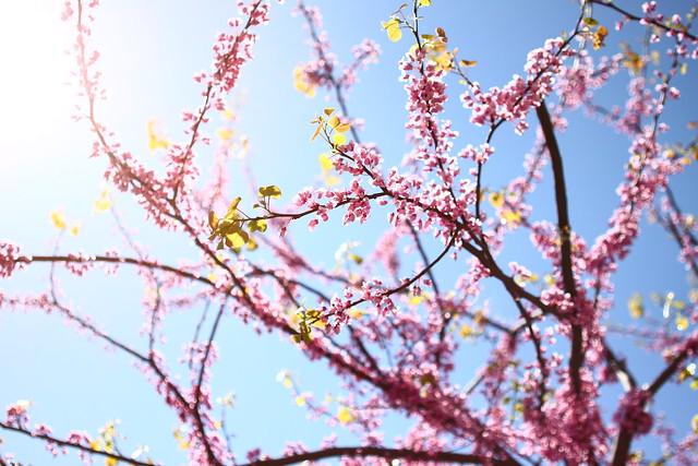 Pink & blue & sunshine