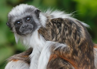 550d Monkey