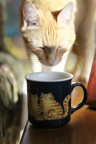 kitty mug shot 3