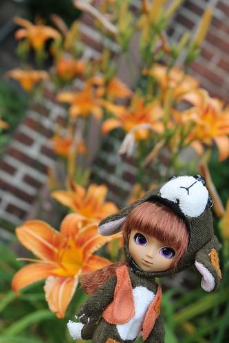 178/365- Little Pullip Dog Winona