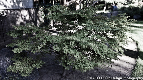 Japanese Garden Trees by d.clin.design