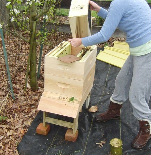 day one: installing the bees