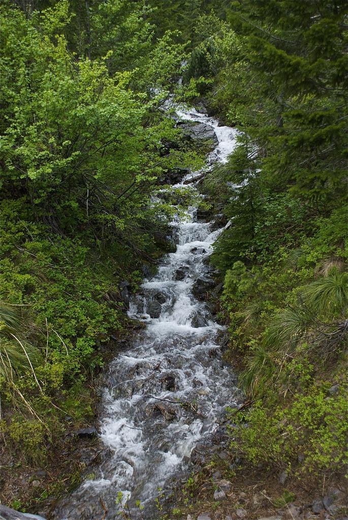 Spring Creek headwaters