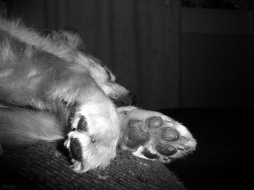 Sleep my friend