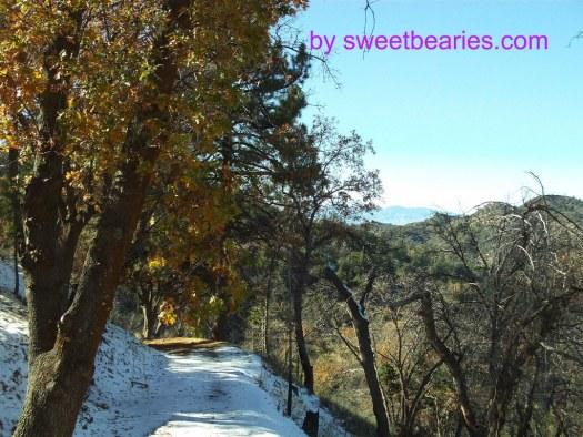 Snow In The San Bernardino Mountains