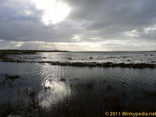 a beautiful wait. the flooded marshland