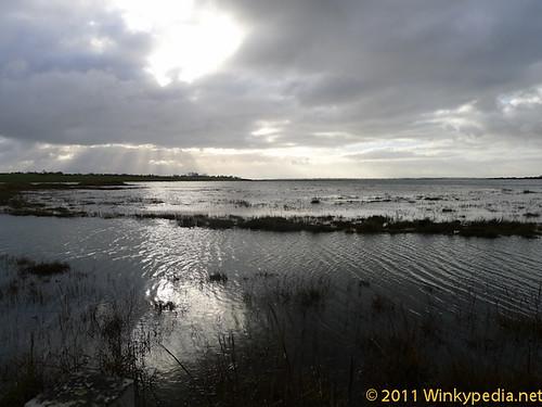 a beautiful wait. the flooded marshland