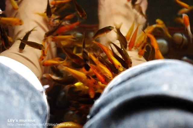 小魚們連我的腳踝跟腿都不放過...