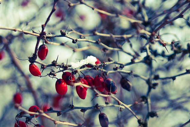 Fructele iernii