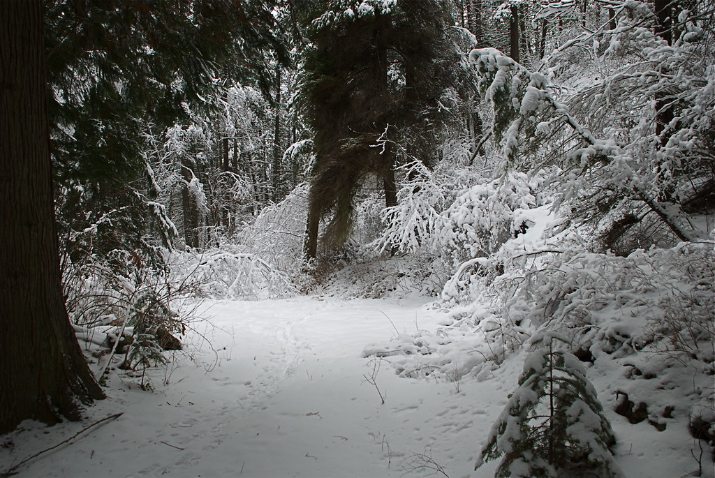 Munson Creek trail in winter