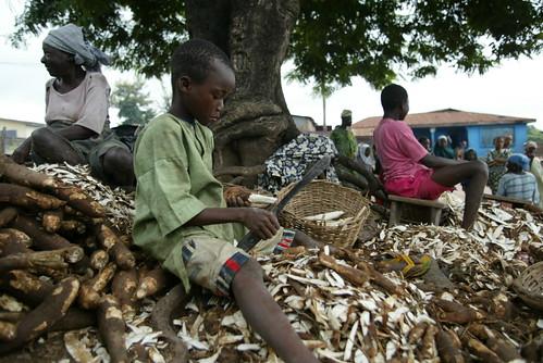 Preparing cassava in Nigeria