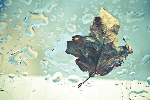 In the Cold Leaf