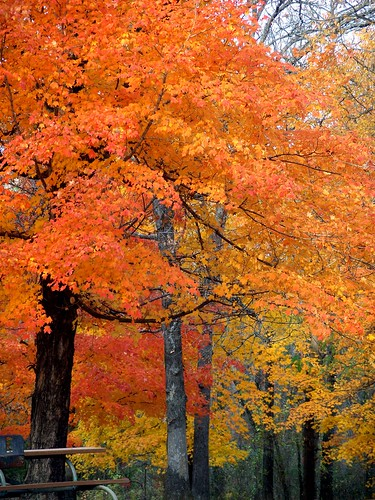 bright fall trees